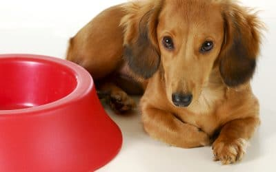 Are Hungry Dogs Super-Motivated For Training?
