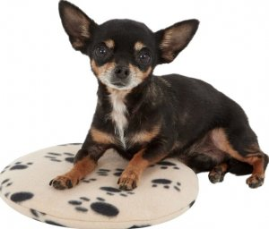 Heating Pad for Chihuahua