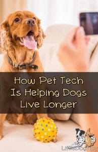 How #PetTech Can Help Your Dog Live Longer