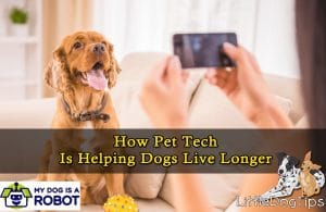 How Pet Tech Can Help Your Dog Live Longer