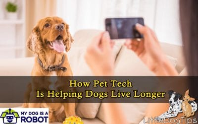 How Pet Tech Is Helping Dogs Live Longer