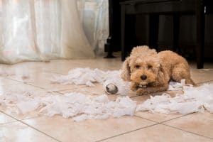 Puppy Ripping Up Pee Pads
