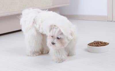 What To Do When Your Dog Won't Eat Dog Food But Will Eat Human Food
