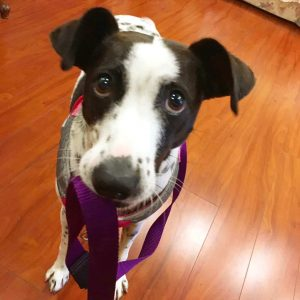 Easy way to reduce barking before walks