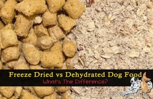 Freeze dried raw vs dehydrated dog food - what's the difference?