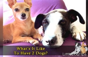 What's It Like To Have A Second Dog?