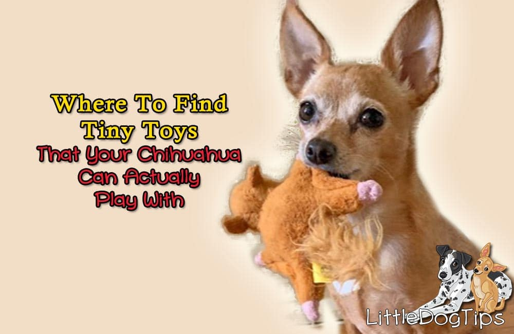 Where To Get Tiny Toys That Your Chihuahua Can Actually Play With