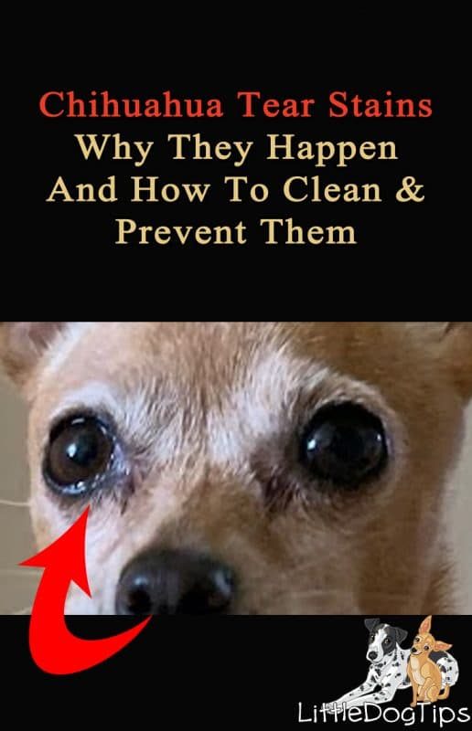 Chihuahua Tear Stains - How To Clean And Prevent Stains From