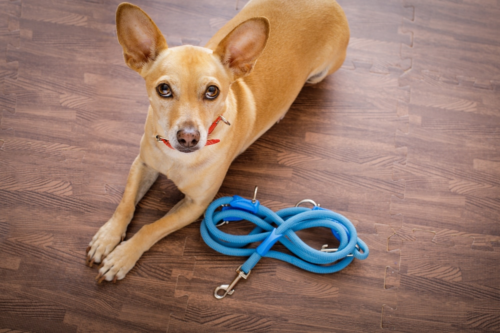 Tethering Or Umbilical Cord Training – How Does It Work?