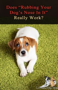 Rubbing Your Dog's Nose In Pee Or Poop - Does It Really Work?