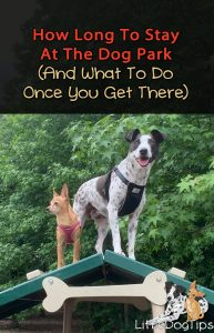 How Long Should You Stay At The Dog Park - And What To Do Once You Get There