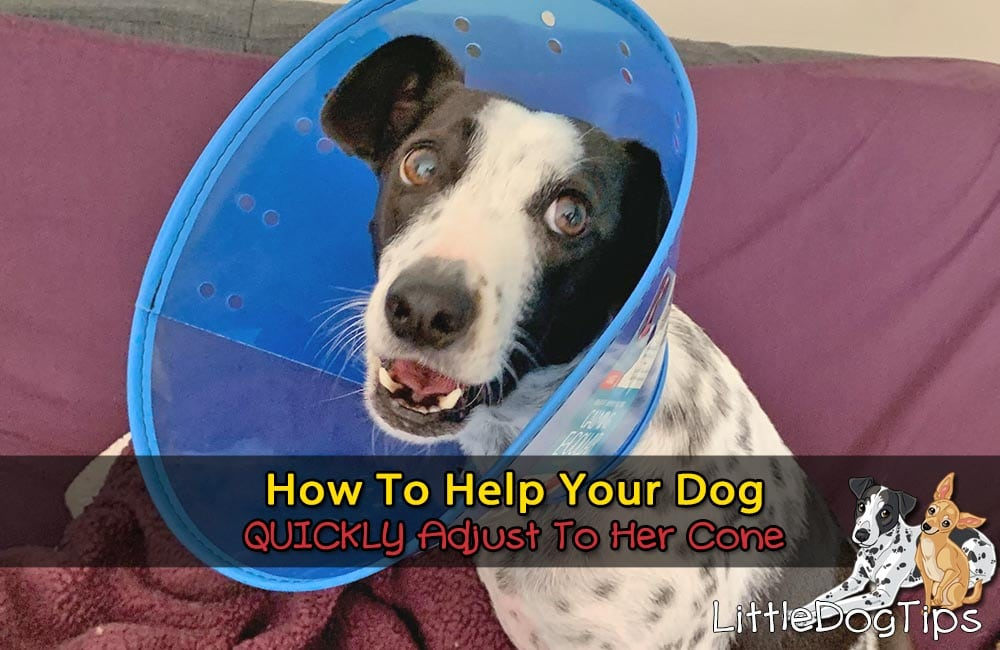 Dog Hates Their Cone? How To Help Her Quickly Adjust To Her E-Collar So She Doesn't Mind Wearing It