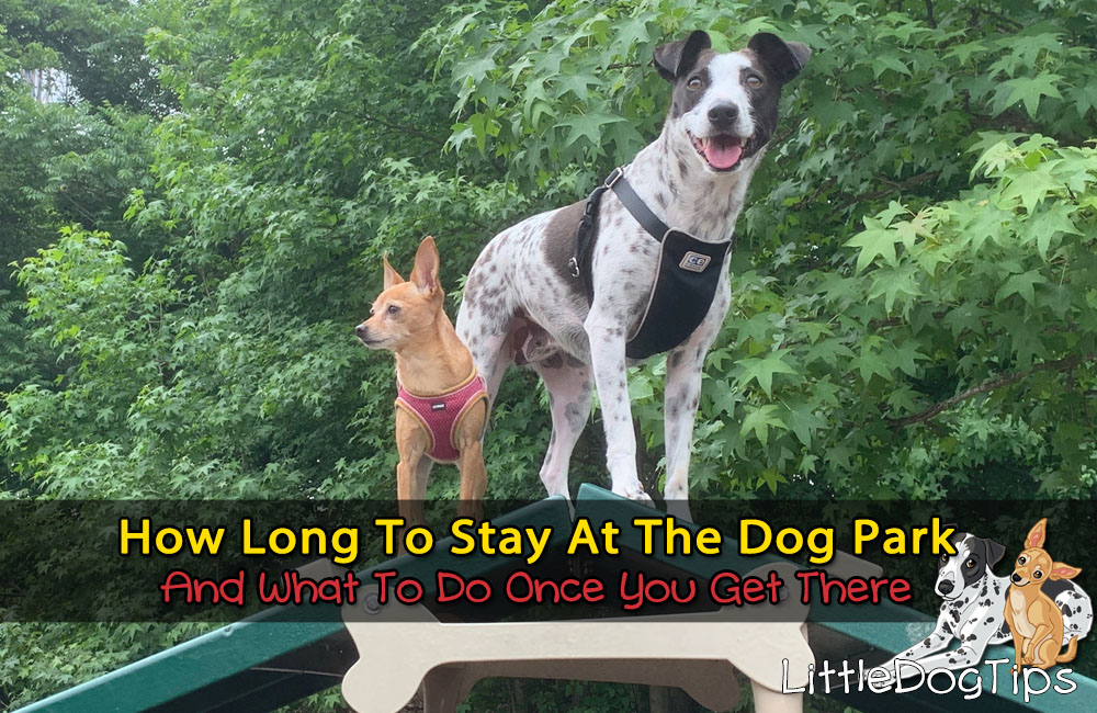 How Long To Stay At The Dog Park… And What To Do While You're There