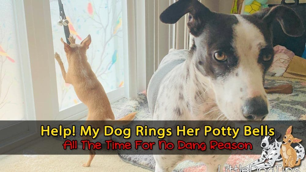 Help! My Dog Won't Stop Ringing Her Potty Bells All The Time… Even When She Doesn't Have To Go Out