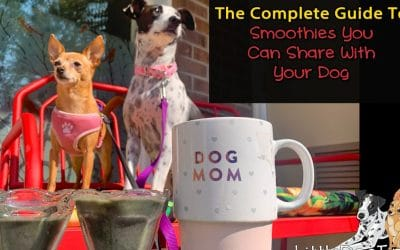 How To Make Smoothies To Share With Your Dog – The Complete Guide