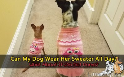 How Long Can A Dog Wear A Sweater? Can She Wear Her Sweater When I'm Not Home?