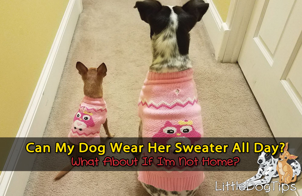 How Long Can Dog Wear Her Sweater. Can She Wear It All Day, Unattended?