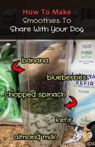 Smoothies for dogs recipes