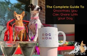 Smoothie Recipes for dogs