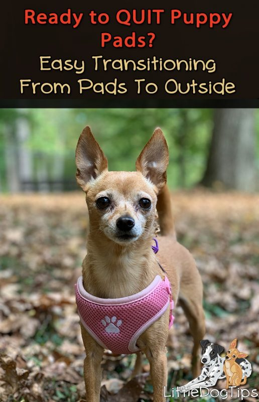 How To wean your puppy off potty pads