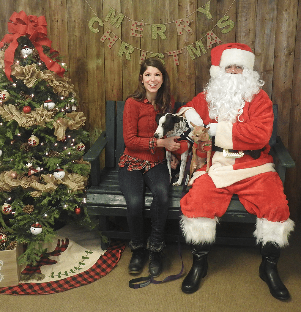Should You Take Your Dog To See Santa This Year? Why We're Not Going - Little Dog Tips