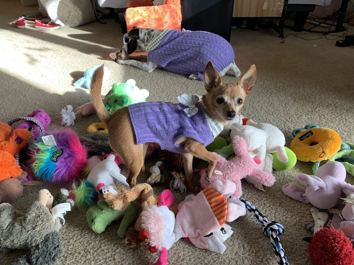 Epic Toy Party: Say YES To This Mess! - Little Dog Tips