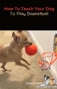 Teach Your Dog To Play Basketball