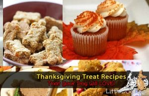 Thanksgiving Dog Treat Recipes