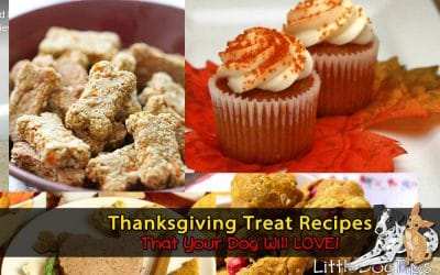 Thanksgiving Recipes Your Dog Will Love