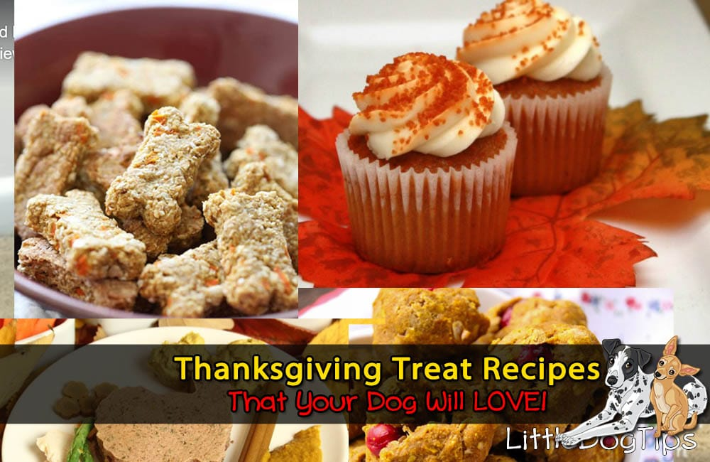 Thanksgiving Dog Treat Recipes