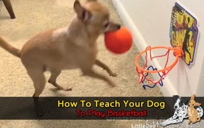 How To Teach Your Dog To Play Basketball