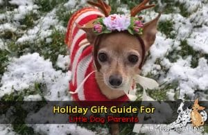 Matilda the chihuahua mix wearing antlers