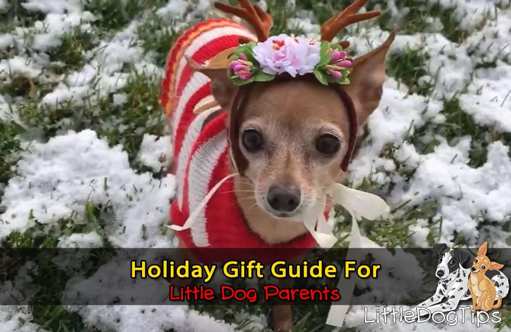 Holiday Gift Guide For Little Dog Parents