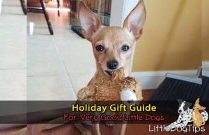Gifts For Little Dogs