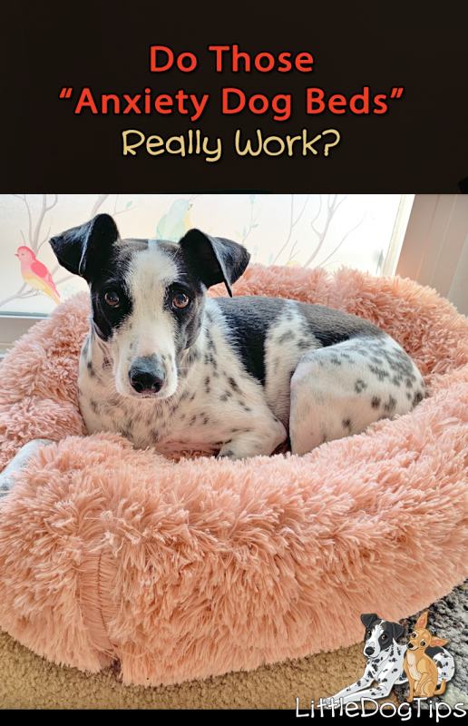 Does The Anxiety Dog Bed Really Work?