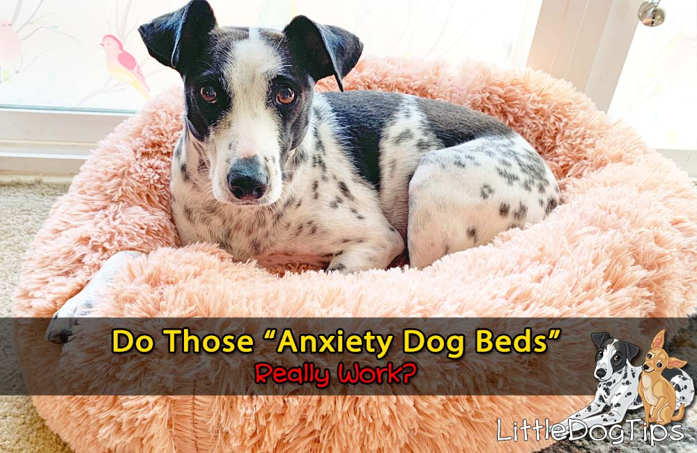 Do Those Anxiety Dog Beds Really Work?