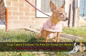 Dog Takes Forever To Pee And Poop On Walks? Here's How To Get Her To Hurry Up