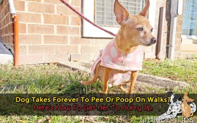Dog Takes Forever To Pee Or Poop On Walks? Here's How To Get Her To Hurry Up