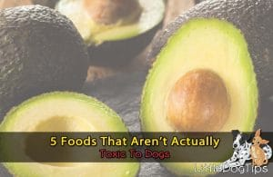Forbidden Foods That Aren't Actually Toxic To Dogs Avocado