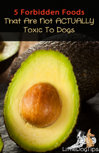 Forbidden Foods Toxic Dogs
