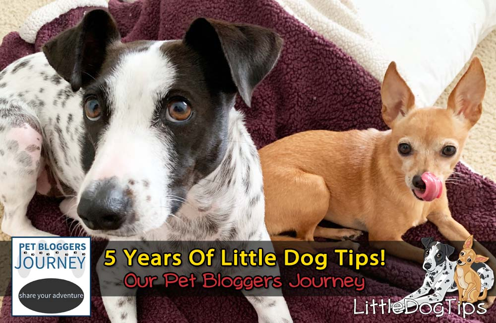 Pet Bloggers Journey 2020: 5 Years Of Little Dog Tips