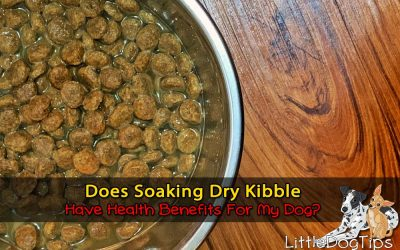 How To Add Water To Your Dog's Food – Benefits Of Adding Water To Dry Kibble