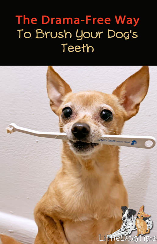 How To Brush Your Dog's Teeth Even If They Hate Brushing
