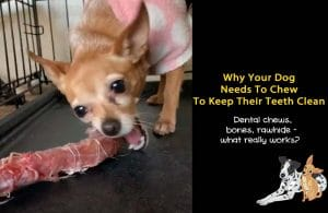 Why I Never Give My Dogs Dental Chews