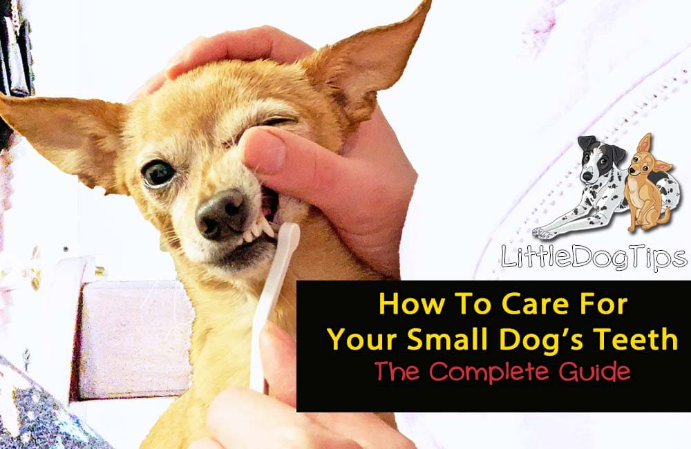How To Care For Your Small Dog's Teeth – The Complete Guide To Your Dog's Dental Health
