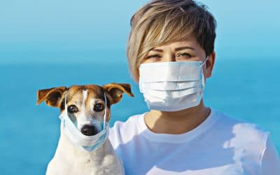 Can My Dog Transmit Coronavirus? What Dog Parents Should Know, And What NOT To Worry About