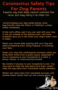 Safety Tips For Coronavirus And Flu Season For Dog Parents