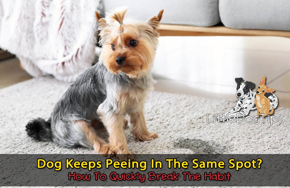 Dog Keeps Peeing In The Same Spot? How To Quickly Break The Habit For Good