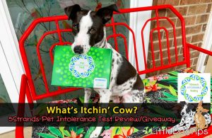 5strands affordable pet intolerance test review