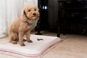 Puppy Pads - Am I A Bad Dog Mom If We Use Potty Pads?